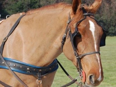 cavallo_400.180x120
