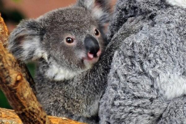 Fascia porta bebè e marsupio al posto del passeggino