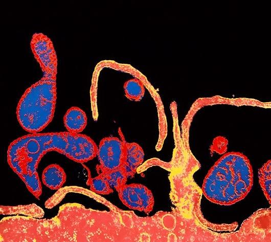 virus-rosolia.180x120