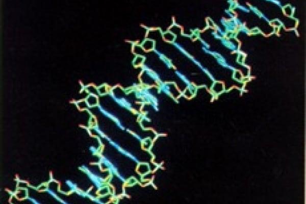 E adesso ci aiuta il DNA