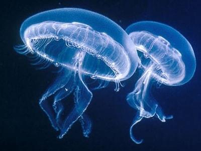 meduse-puntura-400.180x120