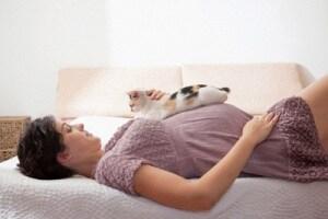 gatto-gravidanza-400