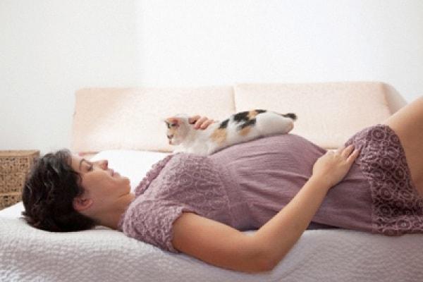 Gravidanza e gatti: i miei compagni di vita, dal test positivo in poi