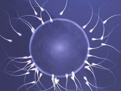 spermatozoi-400.180x120